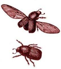 Habitaquo vulgaris