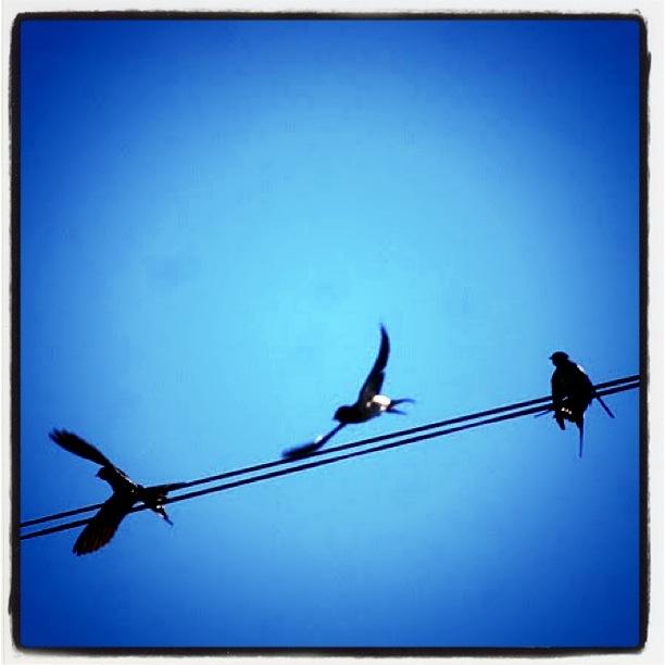 La libertad en un hilo